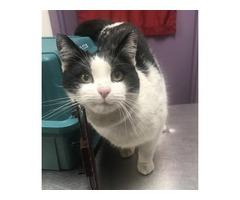 Pet adoption center urgent help