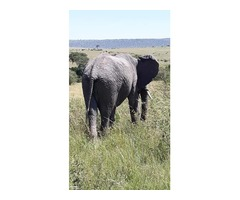 3 days Maasai Mara camping safari
