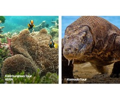Komodo tour packages