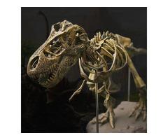 Jurassic Dinosaurs Tyrannosaurus Rex Skeleton Trex Animal Model Kids Toys Gift
