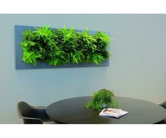 Install Living Pictures Green Screen in Uk