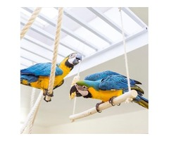 Beautiful hand reared blue and gold macaw pair for sale